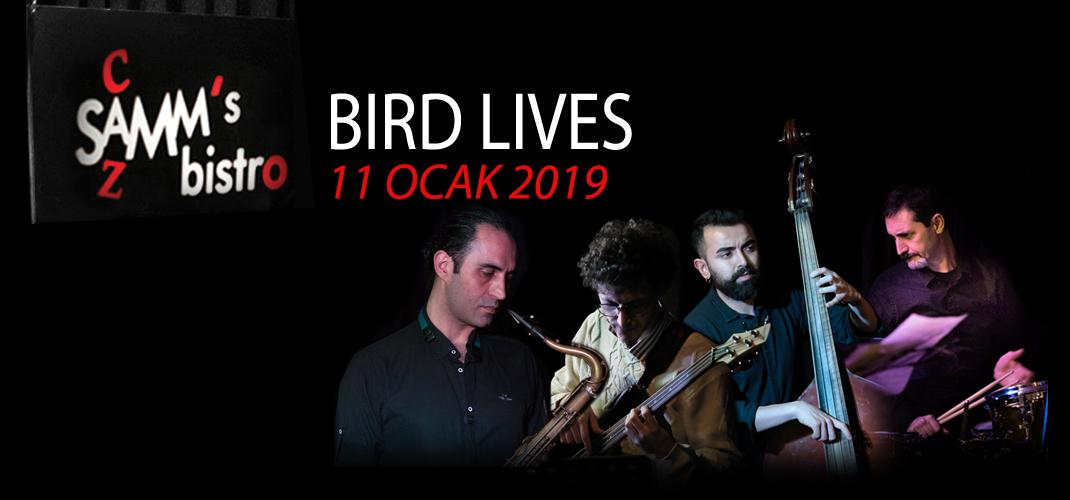 Bird Lives